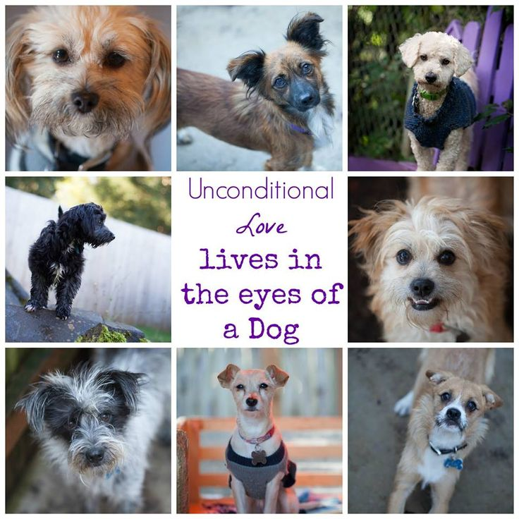The Luvable Difference Dogs, Rescue dogs, Cute dogs