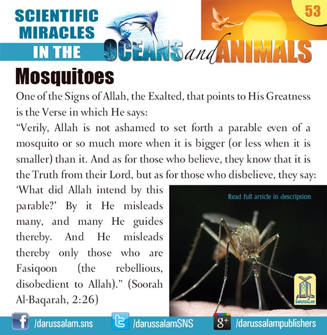 Would you believe that a mosquito has radar equipment? In the darkness of the night it makes straight for the man who is sleeping in his bed, without missing its target. #ScientificMiraclesInTheOceansAndAnimals #DarussalamPublishers #IslamicEBooks #AmazonKindle #KindleStore
