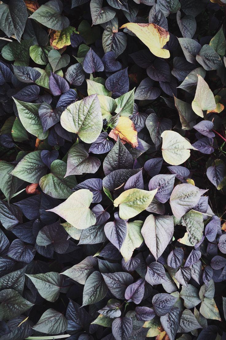 Dark hues in the garden