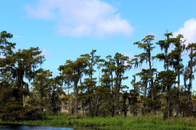 Cypres Bay Airboat adventures, Lafitte swamp Louisiana