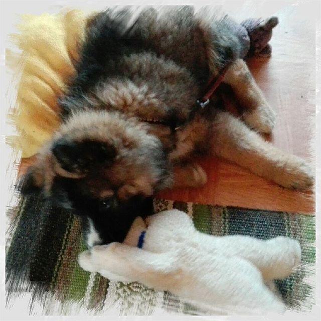 God morgon☀☕ En solig torsdag☀☀ Dock inte så varmt Bella leker o tycker inte om att sitta fast🐕🐶🐕. Men jag ska tvätta golvet idag. Ha en fin dag💙💙 #torsdag #bella #dogsofinstagram #hemmaigränlandet