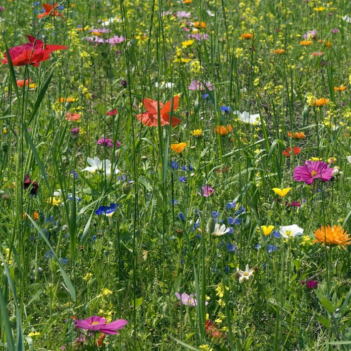 Viel Garten Fur Wenig Geld Wildblumenwiese Wildblumen Wiese Garten