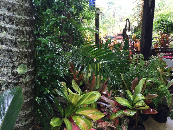 ePlants lush, tropical garden beds enjoying a drop of rain
