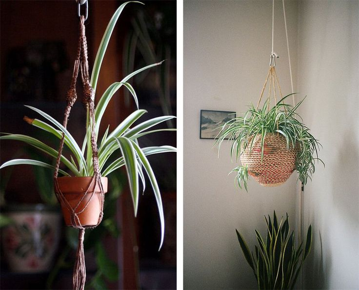 7 best plantes suspendues images on pinterest hanging plants green plants and diy decoration. Black Bedroom Furniture Sets. Home Design Ideas