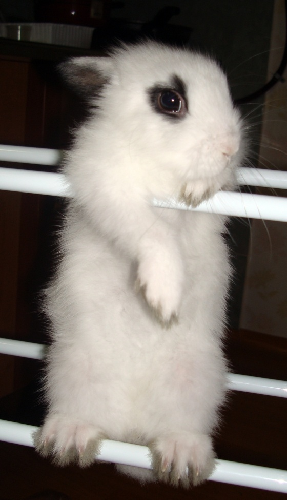 escape bunny - looks just like my Clementine! | Cute ...