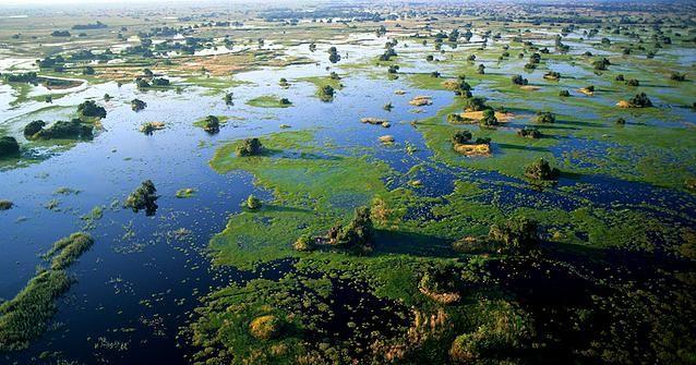 Delta de l'Okavango, au nord du Botswana, dans le bassin Kalahari