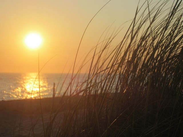 Beach Grass at Sunset in Cape Cod Massachusetts | Cape cod