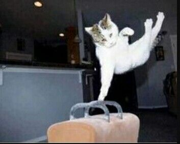 Kitties doing gymnastics talk about so so so real