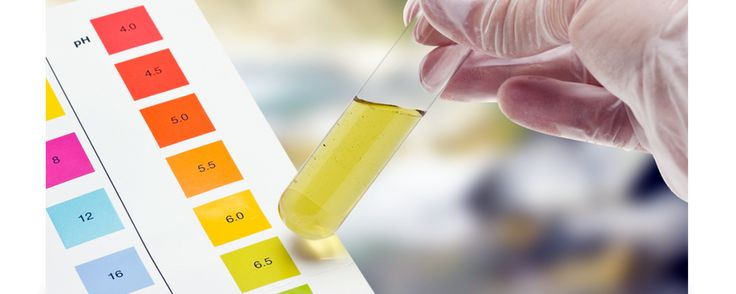 Moving a drug test is an regrettable truth for many people who get examined for new jobs or by their current company. Check out the above link to know more.  #howtopassadrugtest