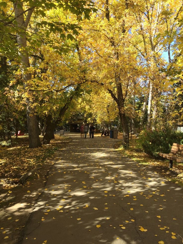 Fall colours in Photos from Calgary, Canada