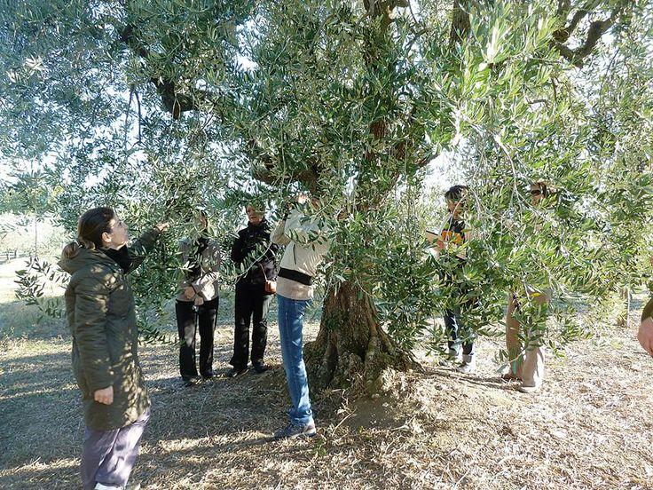 Spanish olive oil magazine Mercacei Magazine talks about our AmorOlio event at Villa Campestri http://www.mercacei.com/noticias_dia/noticia/19888/AmorOlio-prepara-una-nueva-cita-para-descubrir-las-excelencias-AOVE-la-cocina