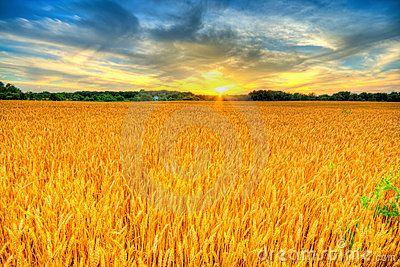 Wheat Sunset - Download From Over 50 Million High Quality Stock Photos, Images, Vectors. Sign up for FREE today. Image: 10248799