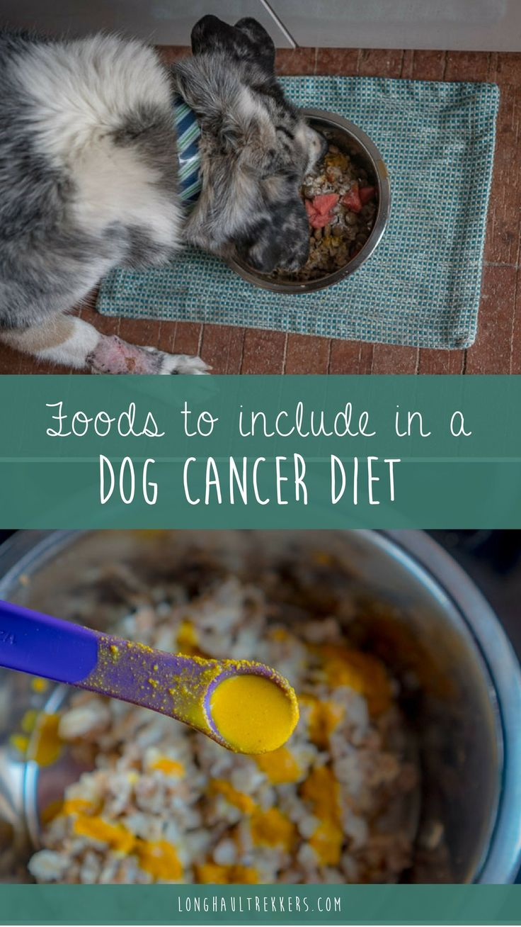 Recommended Foods to Include in a Dog Cancer Diet