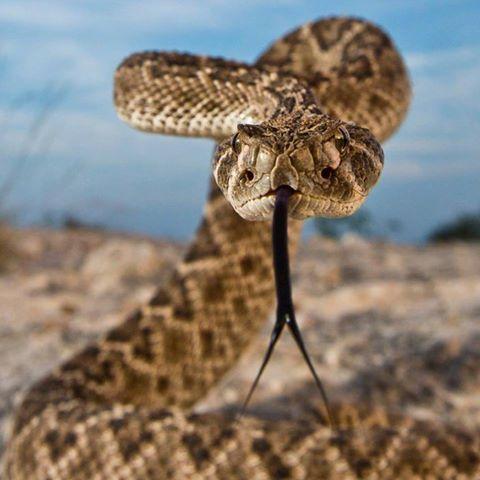 Rattlesnake Discovery's photo.