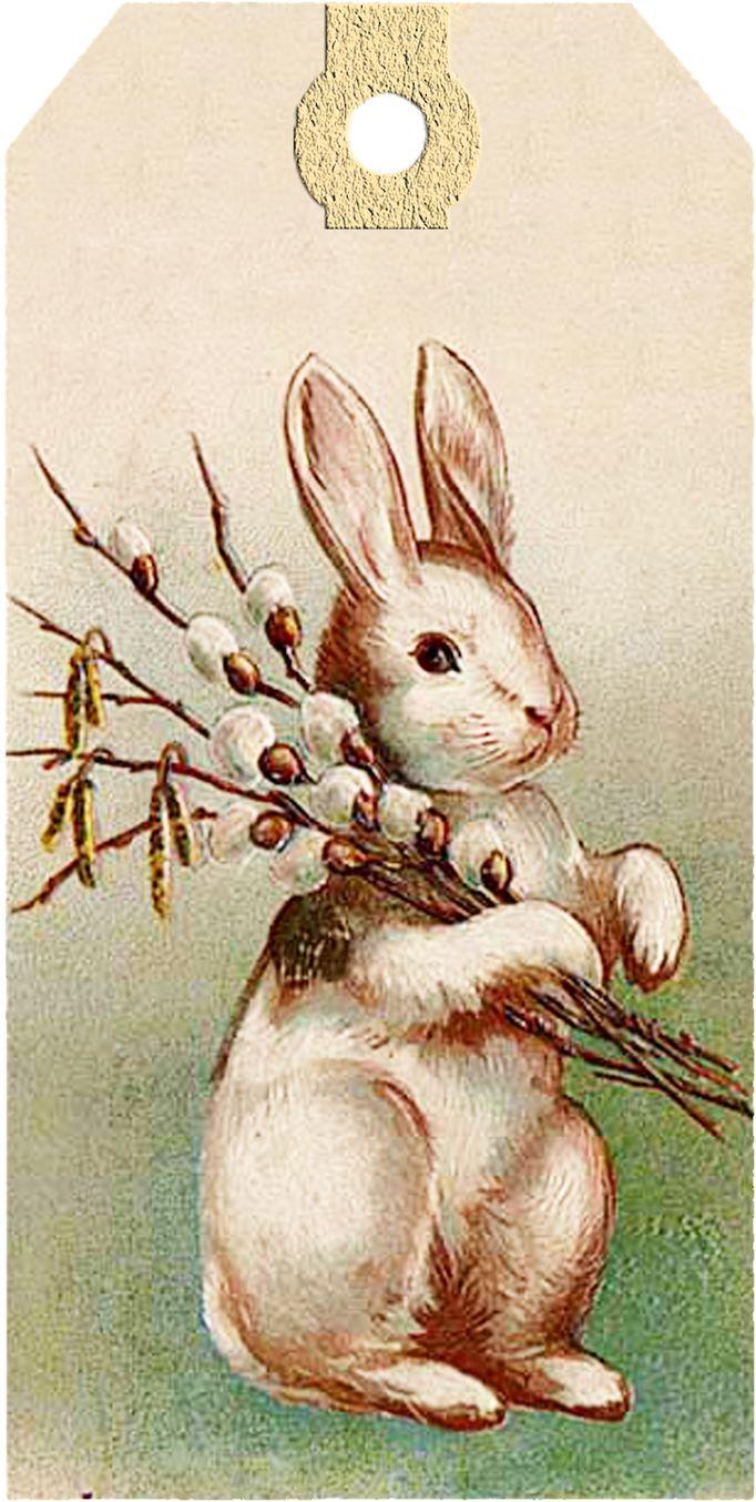 Открытка, винтажные открытки кролики