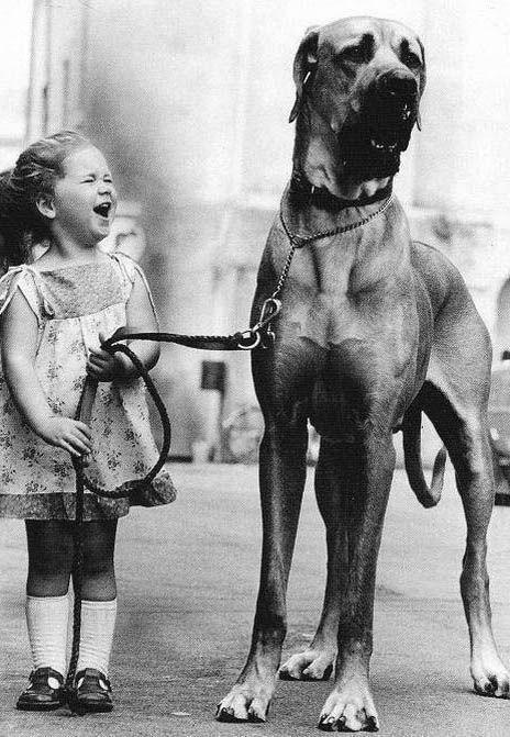 niña simpática con perro grande,   una escena muy sorpresa