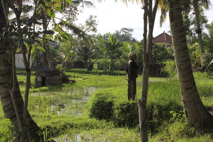 rice fields in Ubud, Bali, more here: www.weareleavingtraces.com