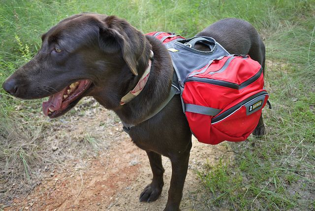 A terrific guide full of things to consider and items to pack when #hiking or camping with your dog!