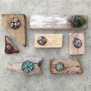 Driftwood planters