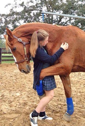 eine Umarmung teilen   – Pferde