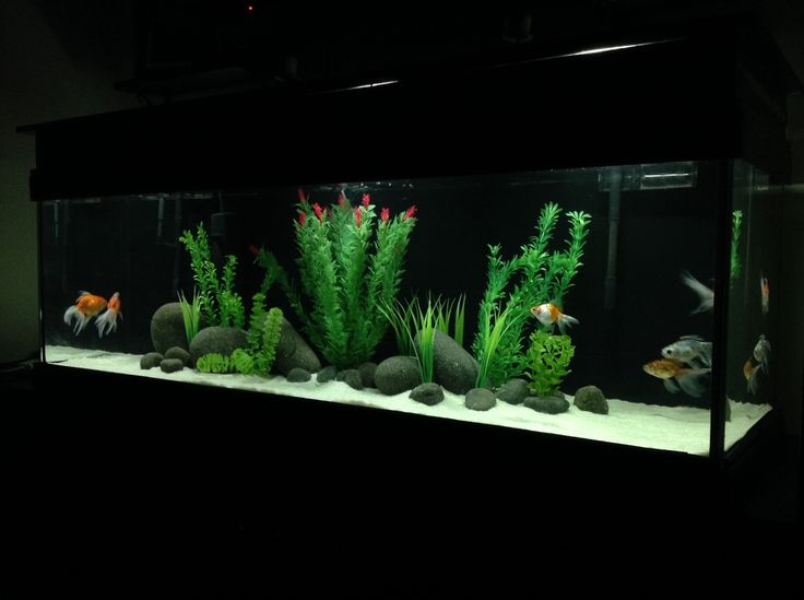 The 25 best goldfish aquarium ideas on pinterest fish for Aquarium decoration for goldfish