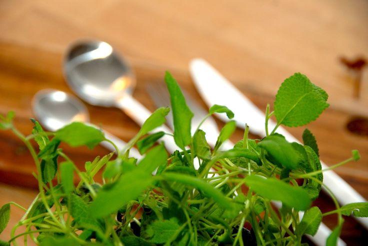Med denne opskrift kan du hurtigt og nemt lave din egen tunsalat. Du skal bruge to dåser tun, og de røres blandt andet med lidt mayonnaise. Til en portion hjemmelavet tunsalat skal du bruge: 2 dåse…