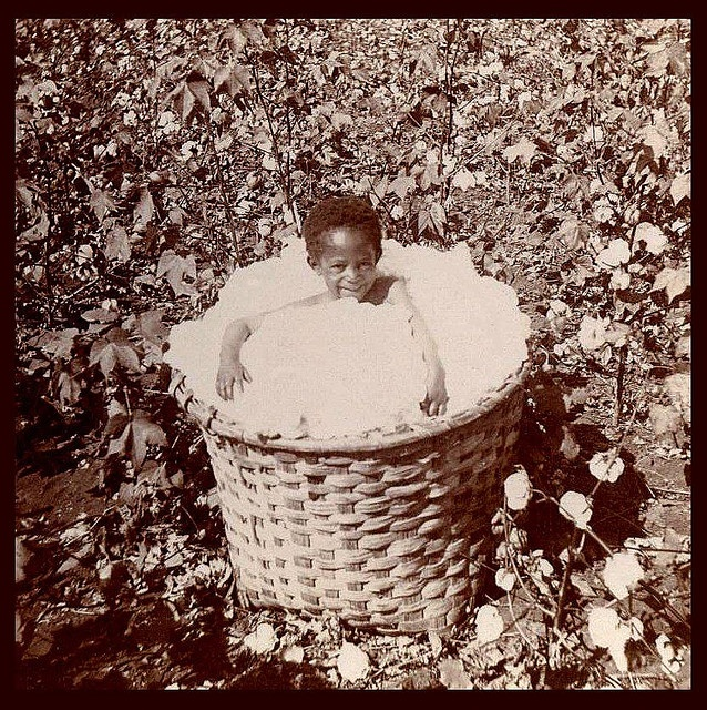"A little Georgia boy, in a basket of freshly-picked cotton bolls. from ""SLAVES, EX-SLAVES, and CHILDREN OF SLAVES IN THE AMERICAN SOUTH, 1860 -1900"""