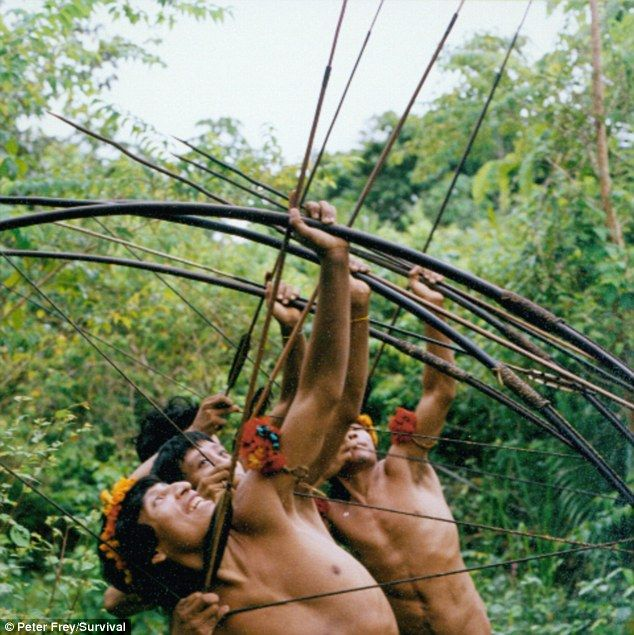 Sharp shooters; Awá men demonstrate their skills with bows and arrows