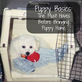 Love and Paws: Puppy Basics: The Must Haves Before Bringing Puppy Home
