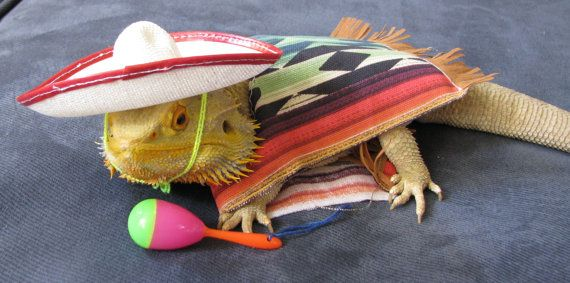 I wonder if I could persuade Tommy to get this Bearded Dragon Mexican Fiesta Costume for Jeffrey.  :)  I think so