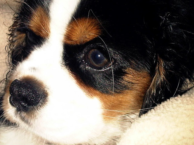 Anya deep in thought #puppy