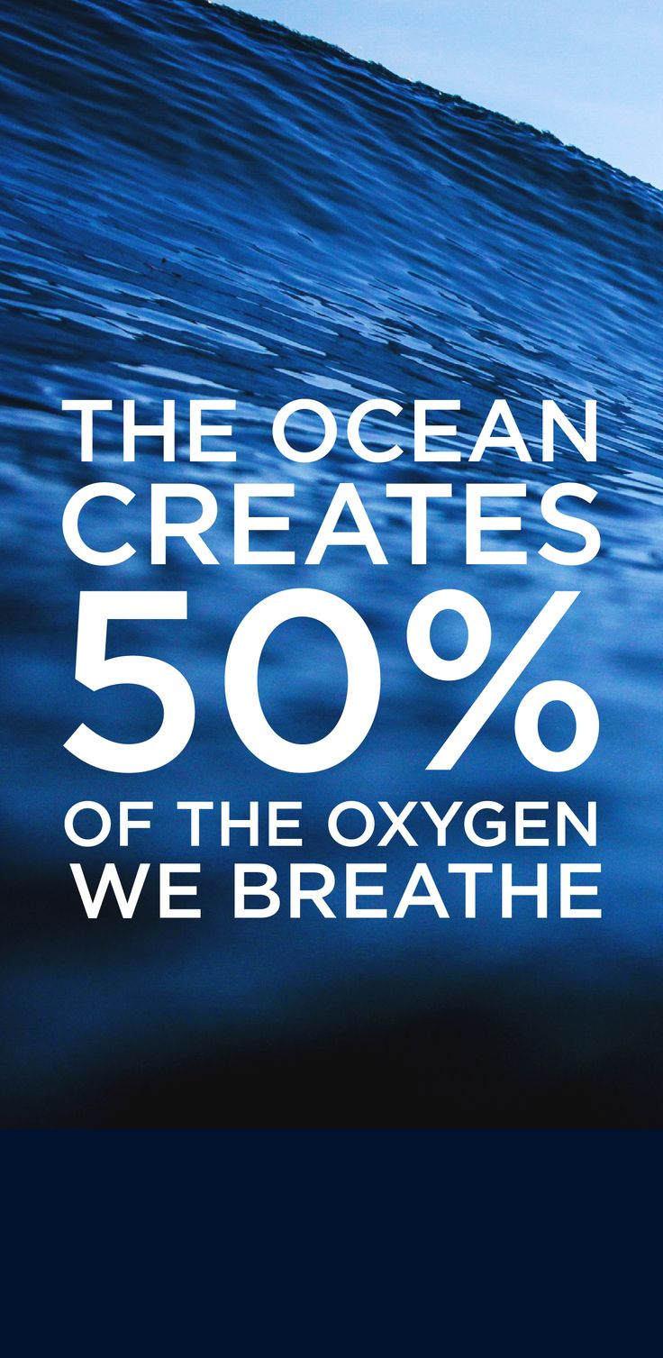 You need the ocean and now it needs you! Activate 1,000,000 boaters to protect the ocean in 2016. https://www.crowdrise.com/1millionfortheocean/fundraiser/sailorsforthesea