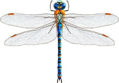 Dragonfly free vector download (107 Free vector) for commercial ...