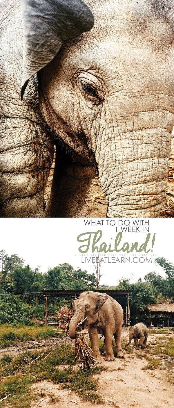 An elephant never forgets // A quick guide of what you need to know for a week of travel in Thailand! The best places to eat and things to do for your trip to Bangkok and Chiang Mai. // Live Eat Learn
