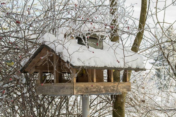 puu, luonto, haara, lumi, kylmä, talvi-, lintu, valkoinen, kukka, kevät, sää, jäädytetty, kausi, esteettinen, lintuja, lintuhuone, lintu syöttölaite, ulkona rakenne