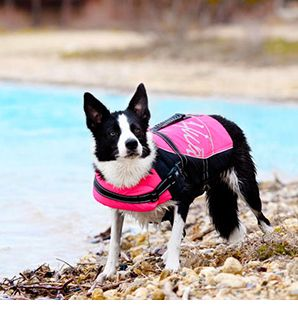 The Dog Boutique - Dog Accessories #dogs #dogcollars #dogboutique #thedogs #dogaccessories