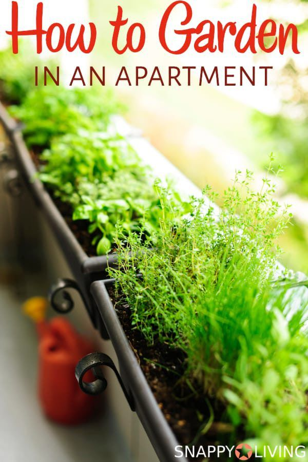 Growing a garden at an apartment might sound like an impossibility, but it's not. Even if you have no sunlight, there are options for you. Learning how to garden in an apartment can really pay for itself.