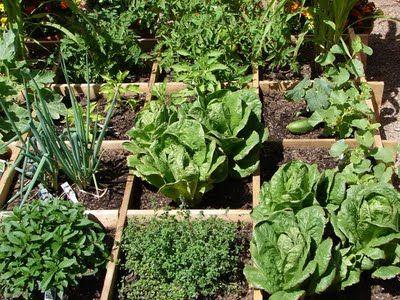 grow boxGardens Ideas, Frugal Living, Dividers Squares, Square Foot Gardening, Gardens Inspiration, Foot Gardening Sfg, Gardens Kits, Squares Foot Gardens, Gardens Passion