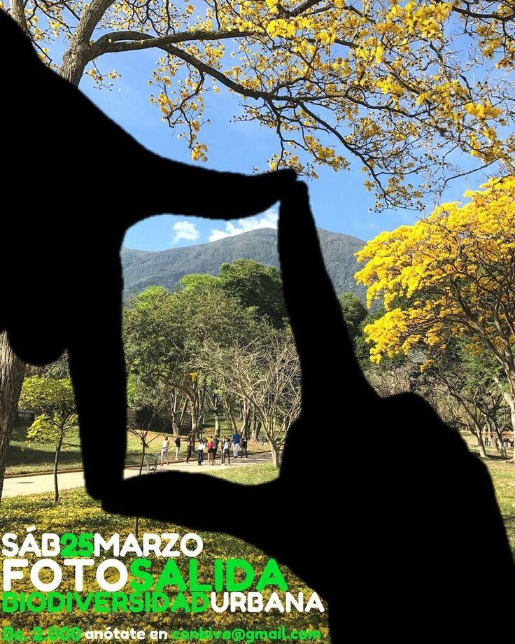 Nos vamos otra vez a caminar por las calles de Caracas a encontrarnos con su flora y fauna y a capturar las mejores imágenes de la desbordante biodiversidad de nuestra urbe.  Este sábado 25 te invitamos a participar en la primera FotoSalida Biodiversidad Urbana de Caracas. Una iniciativa de @ConBiVe que busca mostrarte la naturaleza y conectarte con ella sin que tengas que ir muy lejos.  Vamos a salir a descubrir los araguaneyes bucares y apamates en flor las coloridas aves caraqueñas y…