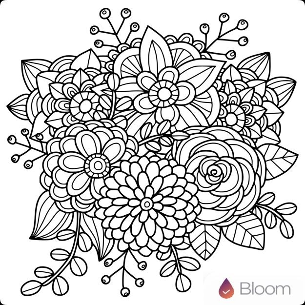 Flower Drawing App: Flowers Images On Pinterest
