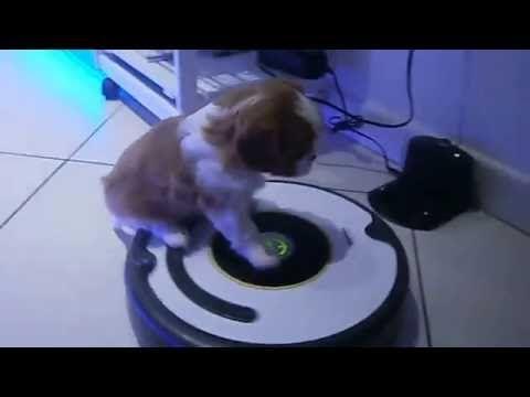 I cuccioli di tutte le specie hanno l'inconsapevole predisposizione a creare situazioni divertenti. Facce buffe dei bambini, gattini in posizioni impossibili, cavalli che