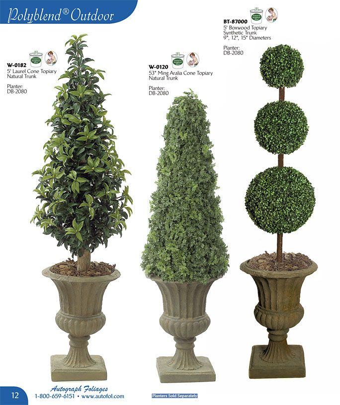 Live Potted Christmas Trees