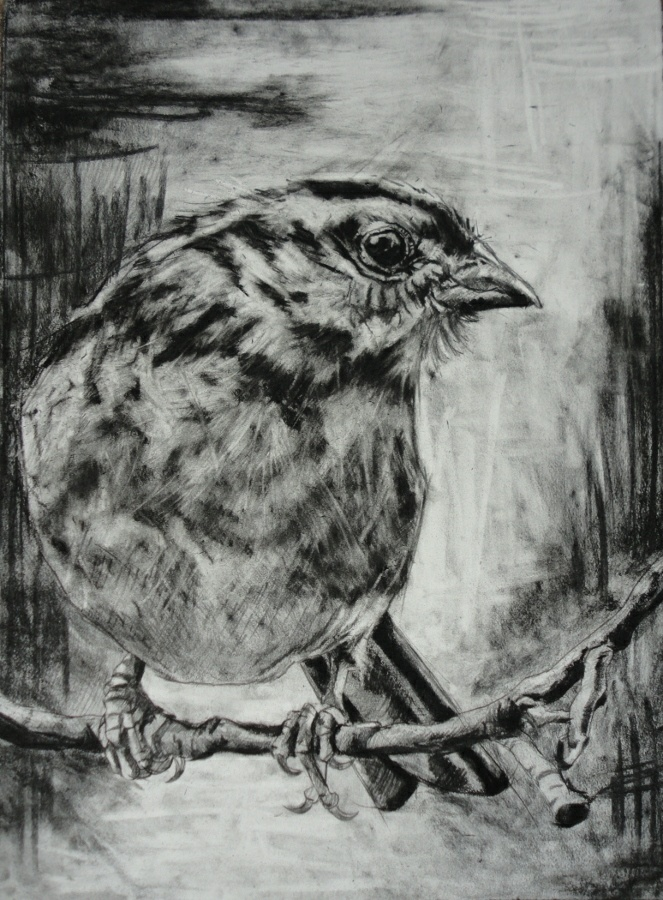484 Best Images About Bird Art On Pinterest | Art School Sketchbooks And The Birds