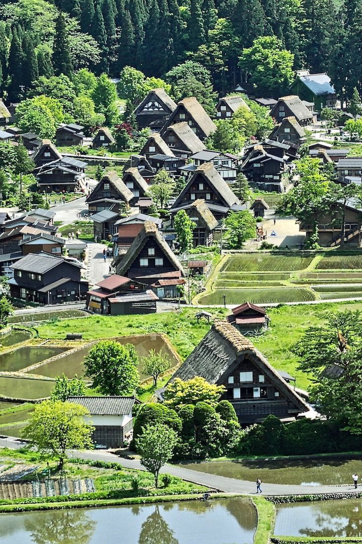 Japan's Shirakawago in Gifu is a great place to experience the start of spring, see the new rice paddies, and marvel at the gassho-zukuri houses.