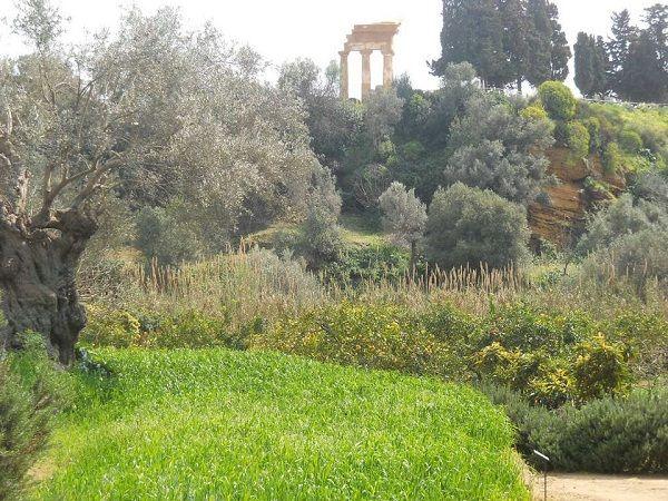 A pochi passi dalle Valle dei Templi di Agrigento, ecco l'antico Giardino della Kolymbetra: in passato meta di viaggiatori del Gran Tour, poeti ed artisti oggi prezioso bene custodito dal FAI