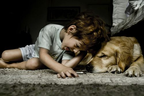 Autism   Dogs seem to have a natural understanding of the child in the house with Autism