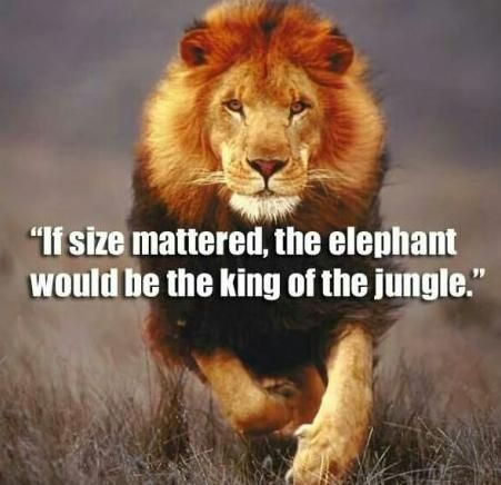 If size mattered #corposflex #bodybuilding #strong http://www.corposflex.com/bsn_no-xplode