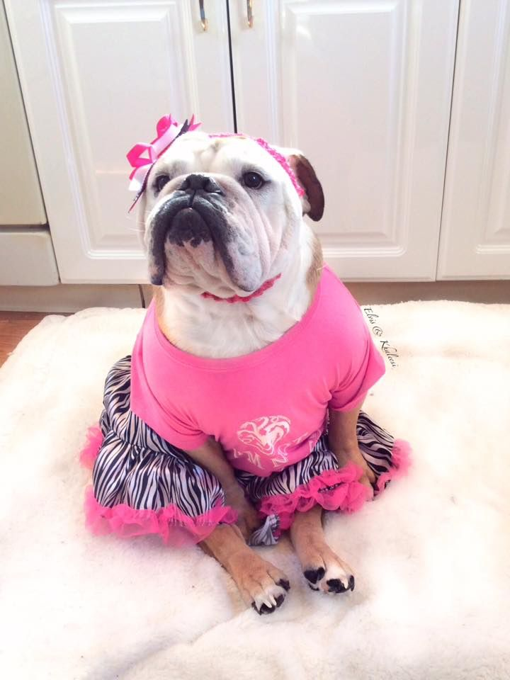 203 best images about Adorable Bulldogs on Pinterest