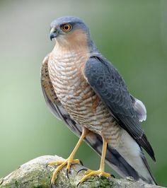bird - Google Search