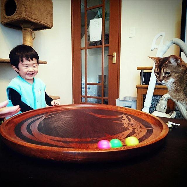 この大きな #おぼん  母が百貨店の食器売り場で勤務していた時に、傷物で売れなくなったものをもらってきたもの… 今まで、何に使う事もなく部屋の片隅にあったのだが… 息子がボールを転がして 猫が興奮して手を出す 息子爆笑!  という遊びが出来る事が発覚😲‼ 母は「いつか役に立つと思ってた」とどや顔(笑)  そして私はやっと産婦人科受診してきた 8週6日で順調とのこと。 早速、母子手帳もらってきました。 今年の11月29日が予定日。 二人目マタニティライフ楽しもう❗  鯉のぼり出したよ。  #2歳2ヶ月 #2歳児 #男の子 #男の子ママ #妊娠中 #二人目妊娠 #滋賀ママ #妊娠初期 #つわり #鯉のぼり #母 #どや顔 #新しい遊び #猫 #愛猫 #アビシニアン #猫と子供 #息子 #爆笑 #新しい遊び #新しい発見